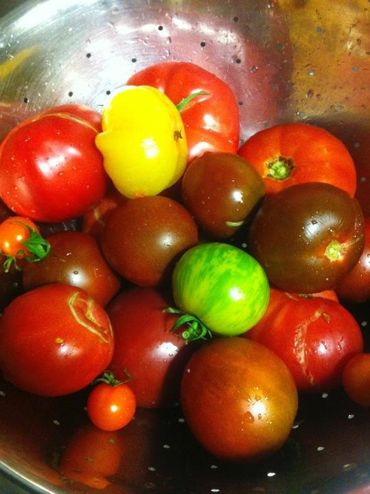 Waterfront Wines Gallery: Fresh organic tomatoes